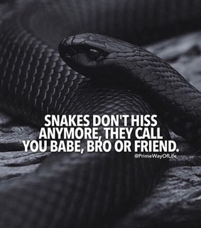 snakes, lie and babe