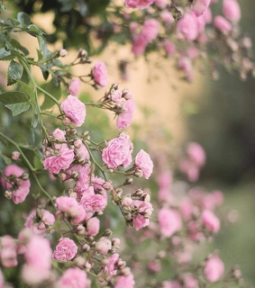 cuusce, pink and flowers