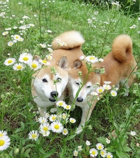 friends, daisies and lovely