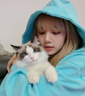 blackpink lisa, soft blue and black pink