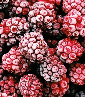 food, raspberries and cherry red