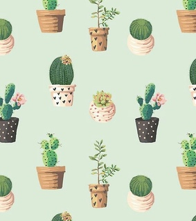 background, cacti and goals