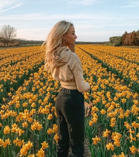 yellow flowerfield, summer and style