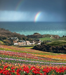 rainbow, inglaterra and flowers