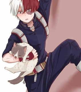 boy, shouto and cat