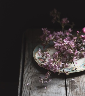 flowers, botany and photography