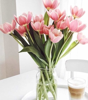 pink tulips, tulips and colors