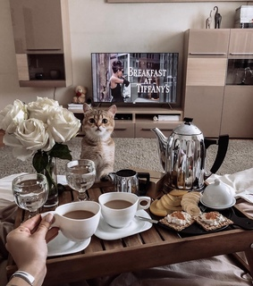 cat, coffee and sweet home