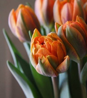 tulips, bouquet and beautiful