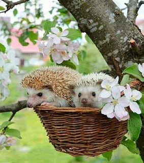 pets, cute and nature