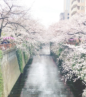 nakameguro, flowers and cherryblossom