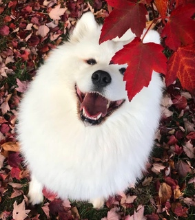 red, smile and dog