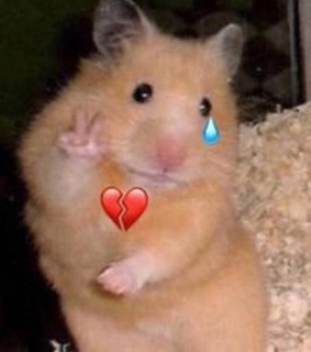 heart broken, funny and hamster