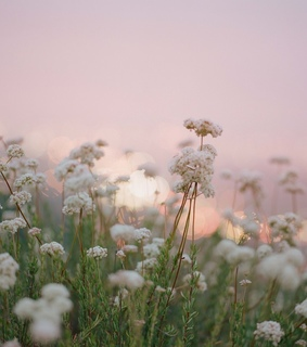 flowers, bokeh and mist