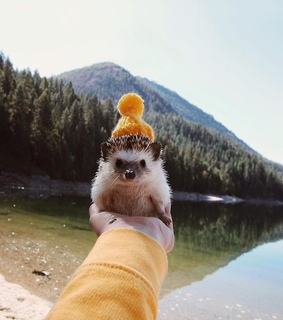 photography, cute and animal