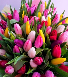 pink tulips, lifestyle and beautiful