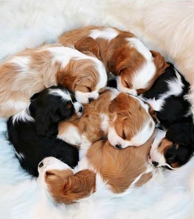 puppies, filhotes and puppy