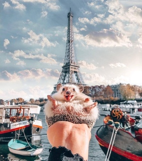 animals, france and travel