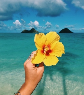 blue, flower and vitamin sea