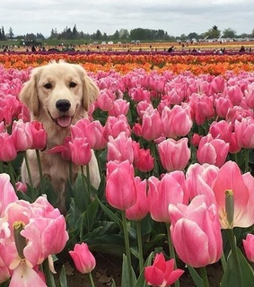 spring, puppy and cute