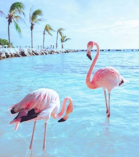 summer, tropical and animal photography