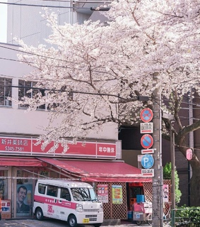 japan, cherryblossom and pink