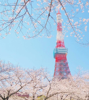 cherryblossom, aesthetic and japan