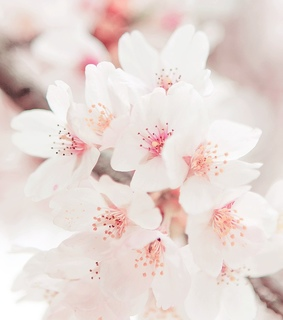 floral, pastel and background