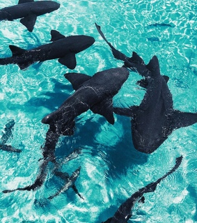 sharks, dolphins and ocean