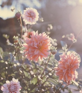 cute flowers, nature and floral