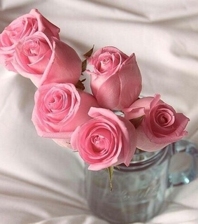 pink, flower and pink rose