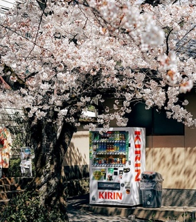 nature, cherry trees and aesthetic
