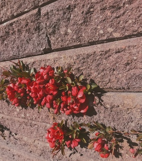 red, flower and wall