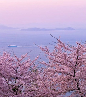 pastel, japan and cherryblossom