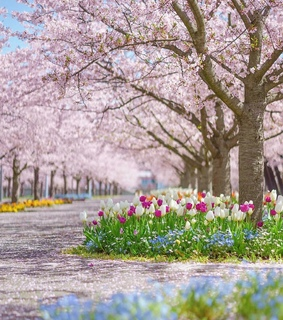pastel, flowers and spring