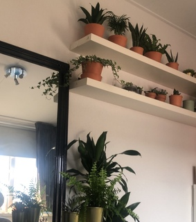 succulents, my room and candles