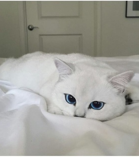cat, blue aesthetic and uwi