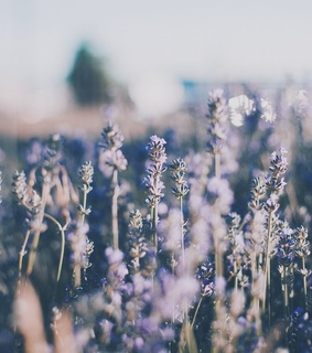 wallpaper, spring and light purple