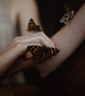 vintage, butterflies and naturephotography