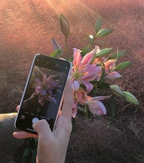lilies, photo and 2019