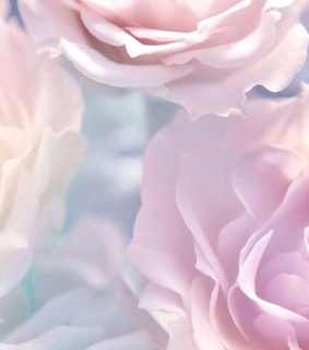 rose, floral and soft