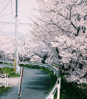 road, bomi and spring