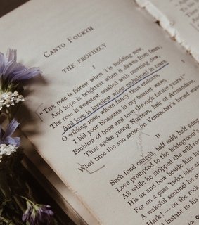 purple, book and bookworm