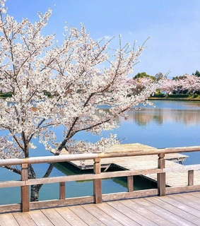 aesthetic, cherry trees and beauty