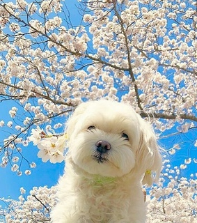 dog, animales and cute