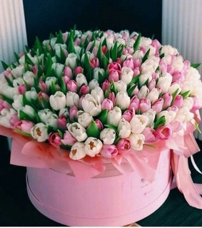 tulips, pink tulips and pretty