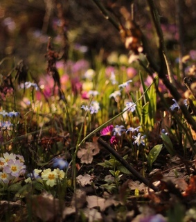 spring, photography and botany