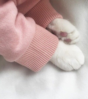 pink, animal and cat