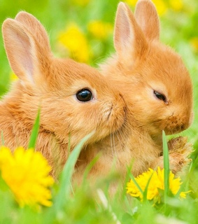 dandelions, easter and rabbits