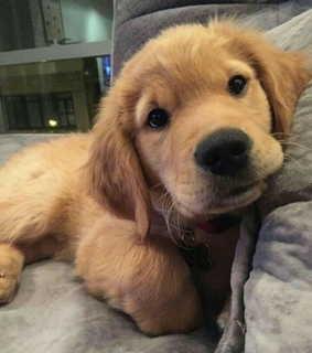 dogs, adorable and cute